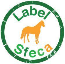 Logo SFECA