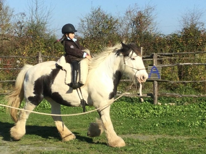 17-Travail à cheval