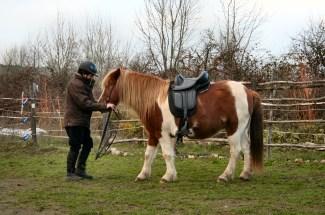 Selle barefoot adaptée à chaque cheval